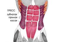 Правила тренировок для мышц живота