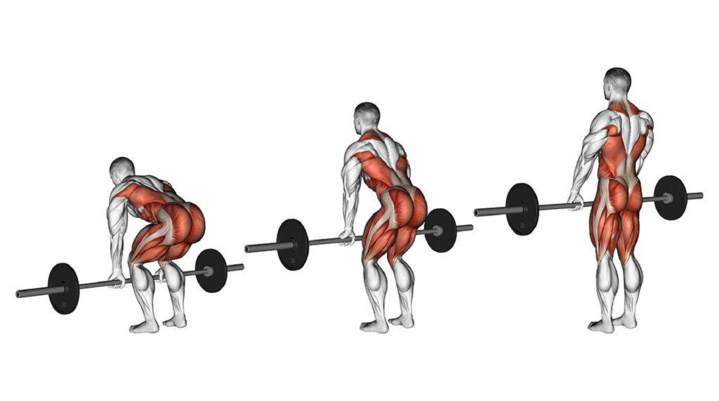 Какие зоны работают при выполнении становой тяги