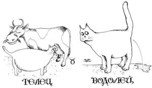 Совместимости водолея и телец